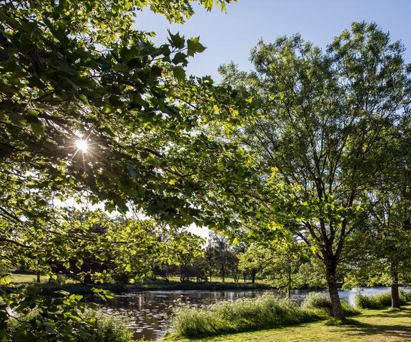 Parc arbore de l